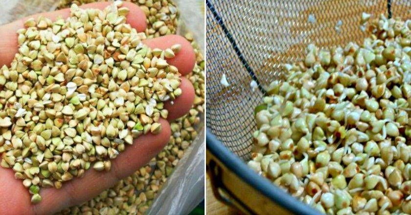 Хумус з зеленої гречки подивитися рецепт