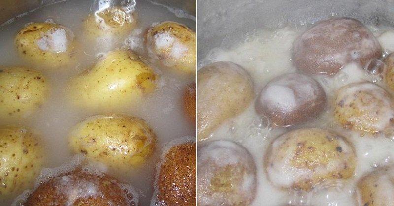 Картопля «Фрайт»
